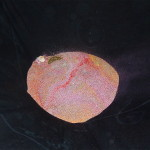 Dismantled sand mandala